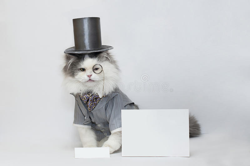 Gato Inteligente Fotografía de archivo libre de regalías