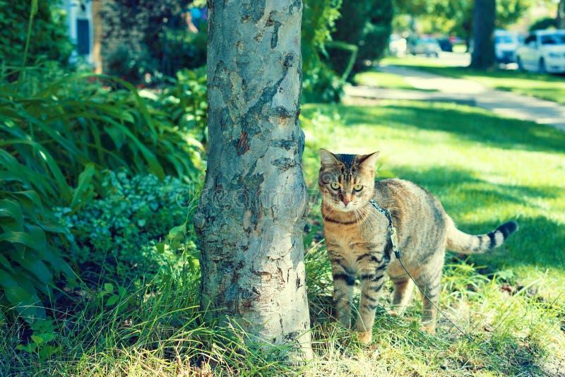 Gato joven foto de archivo libre de regalías