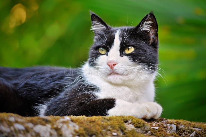 Gato joven blanco y negro foto de archivo