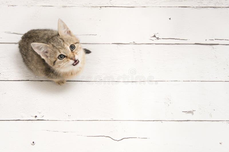 Gato joven del gato atigrado lindo que mira para arriba imagen de archivo libre de regalías