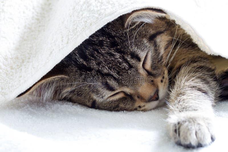 Gato joven del gato atigrado gris que descansa y que duerme debajo de la toalla blanca fotos de archivo libres de regalías