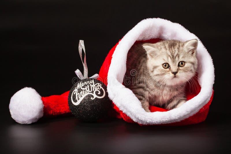 Gato joven dentro del sombrero de Papá Noel imágenes de archivo libres de regalías