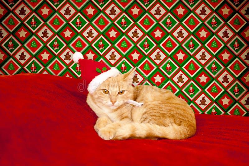 Gato joven en un ajuste de la Navidad imagenes de archivo