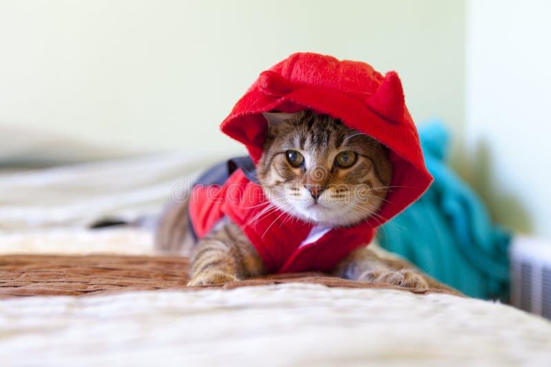 Gato joven lindo imagen de archivo