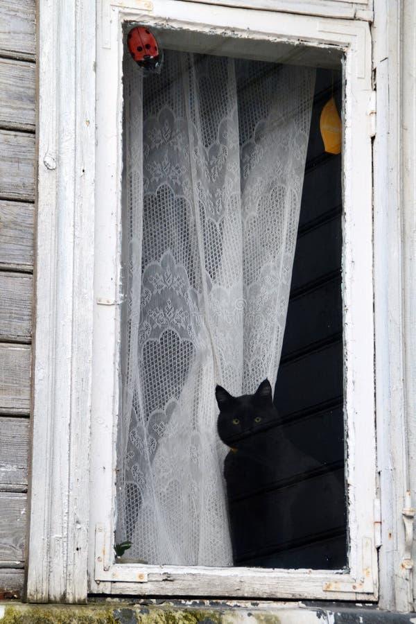 Gato leal que espera a su dueño para volver a casa fotografía de archivo