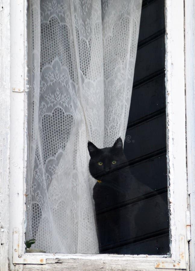 Gato leal que espera a su dueño para volver a casa imágenes de archivo libres de regalías