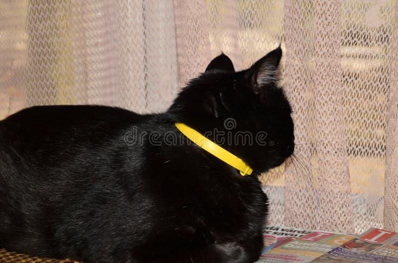 Gato leal que espera a su dueño para volver a casa foto de archivo