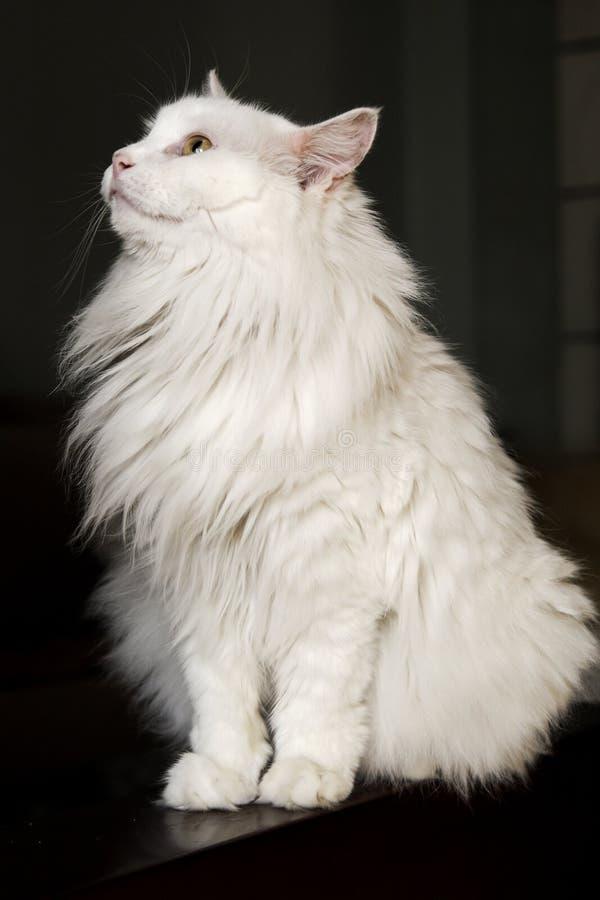 Gato lindo. foto de archivo