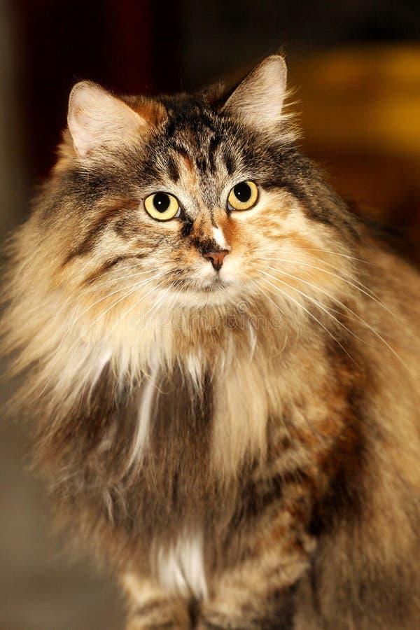 Gato lindo. fotografía de archivo libre de regalías