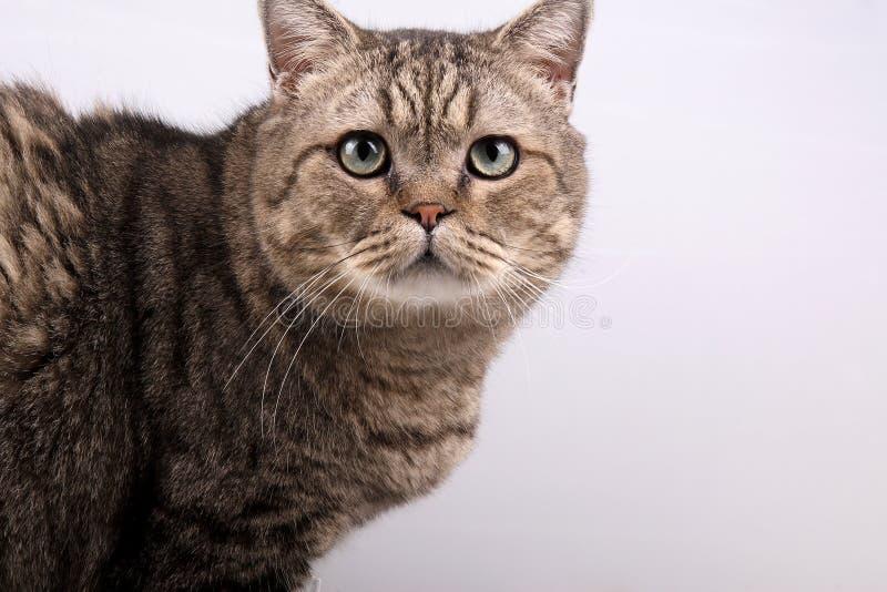 Gato lindo. foto de archivo libre de regalías