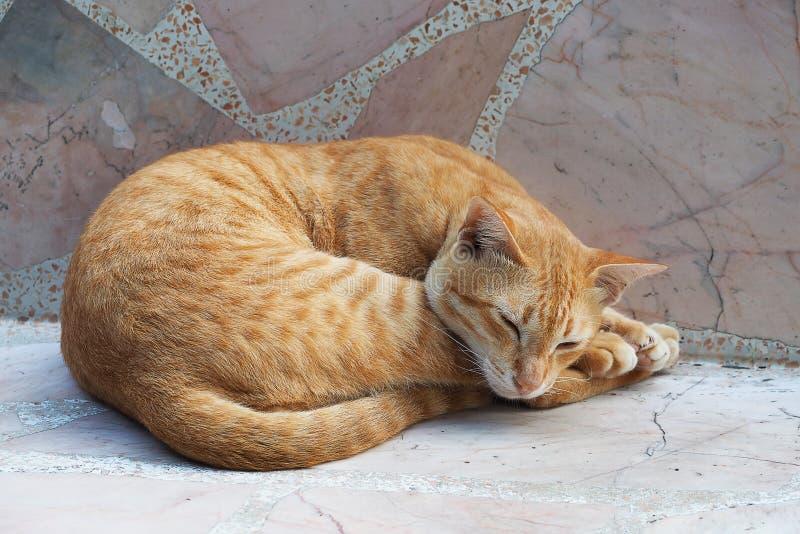 Gato lindo amarillo que duerme en la silla de mármol imágenes de archivo libres de regalías