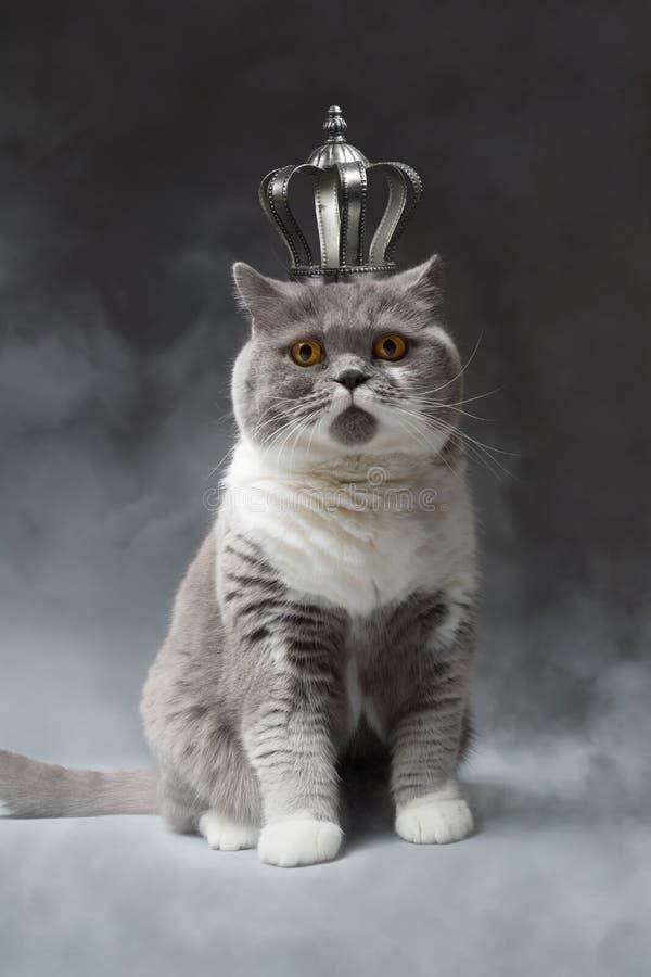 Gato lindo con la corona de plata imagenes de archivo
