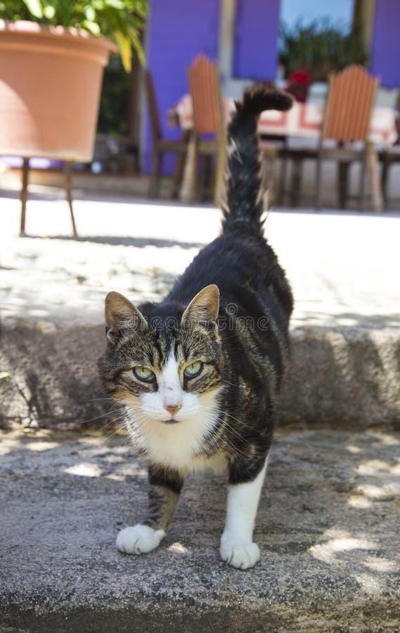Download Gato Lindo Con Los Ojos Verdes Foto de archivo - Imagen de capa, felino: 41910006