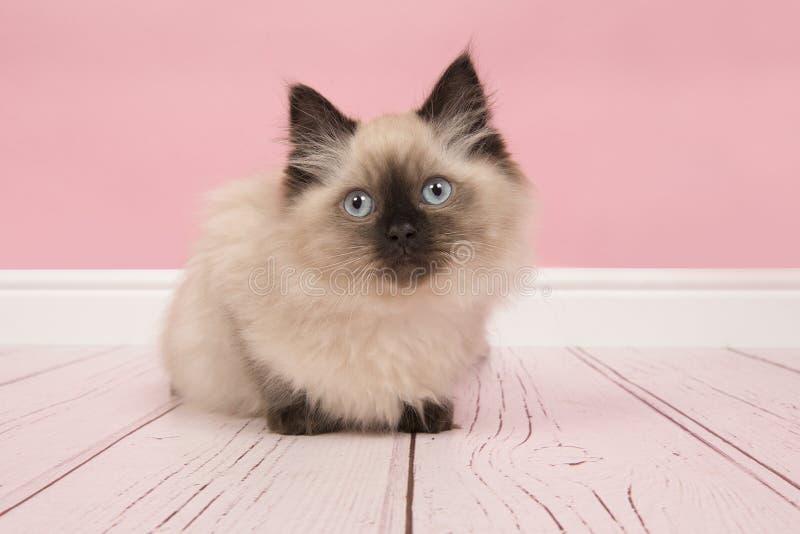Gato lindo de la muñeca de trapo con los ojos azules en un SE rosado de la sala de estar del estudio foto de archivo