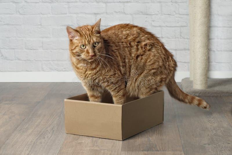 Gato lindo del jengibre en la caja de cartón, mirando de lado imagen de archivo libre de regalías