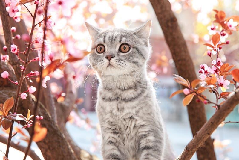 Gato lindo en árbol floreciente foto de archivo libre de regalías