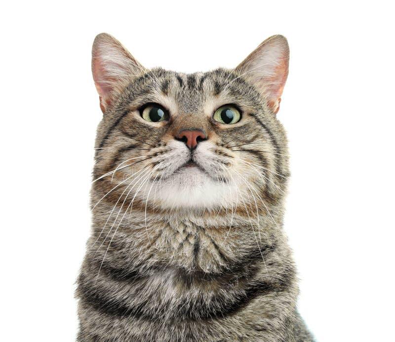Gato lindo en el fondo blanco imagen de archivo