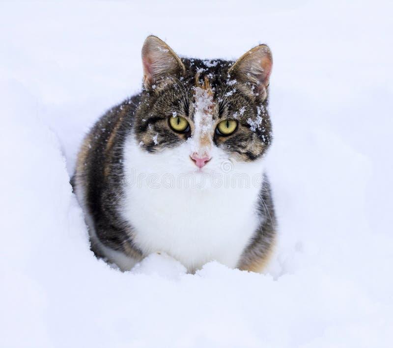 Gato lindo en nieve fotos de archivo libres de regalías