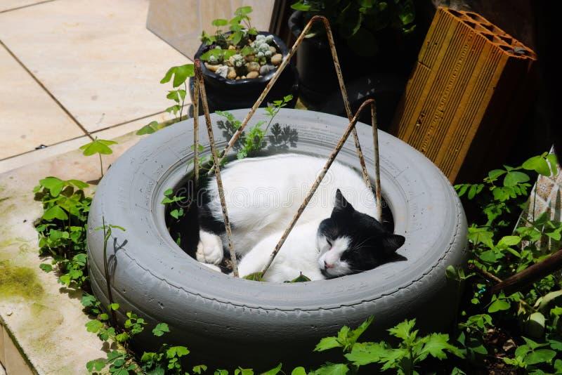 Gato lindo no sono do pneu imagem de stock