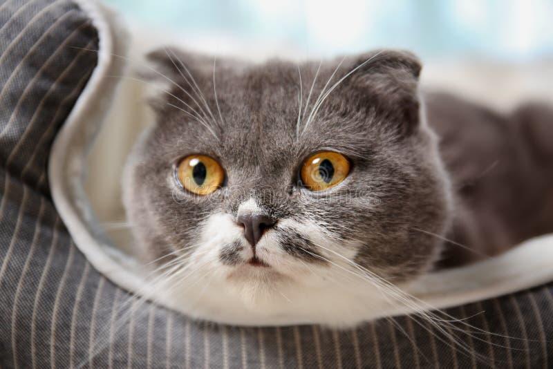 Gato lindo que descansa sobre cama del animal doméstico imagen de archivo