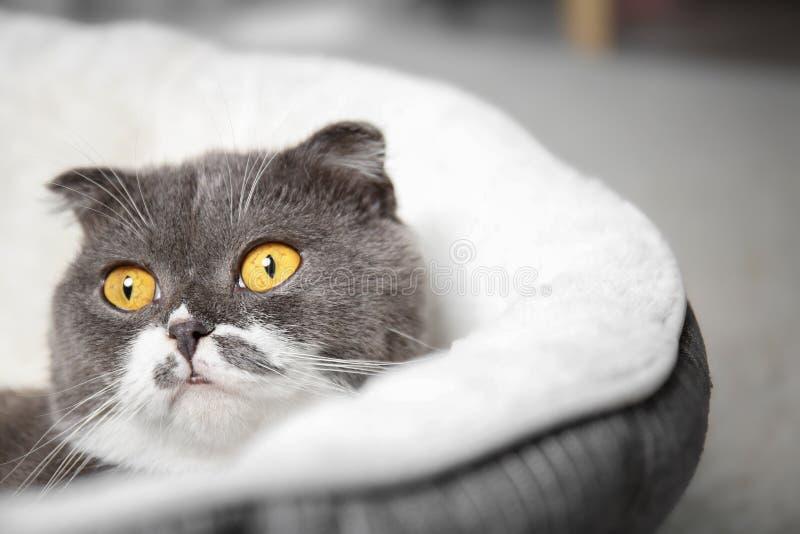 Gato lindo que descansa sobre cama del animal doméstico fotos de archivo