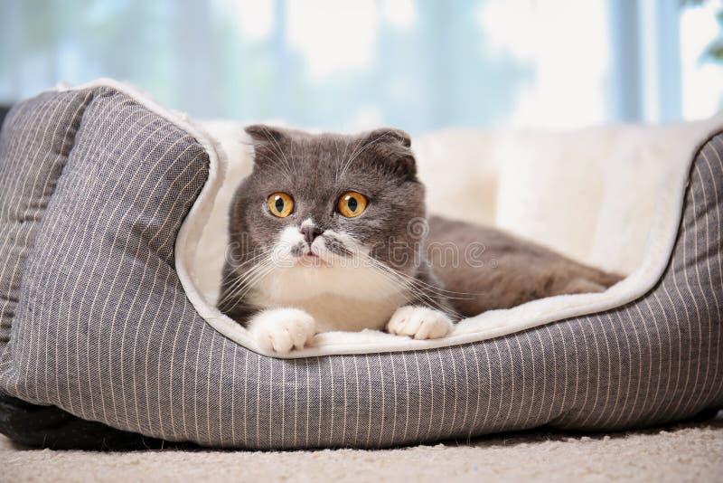 Gato lindo que descansa sobre cama del animal doméstico imágenes de archivo libres de regalías