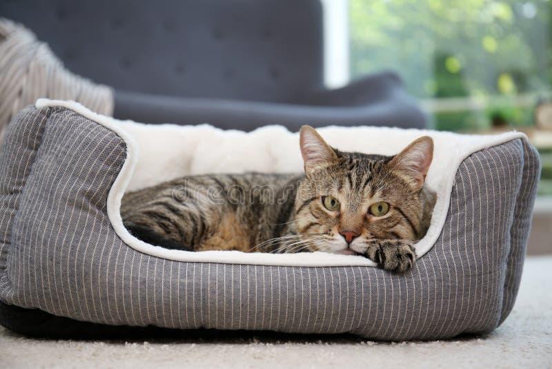 Gato lindo que descansa sobre cama del animal doméstico imagenes de archivo