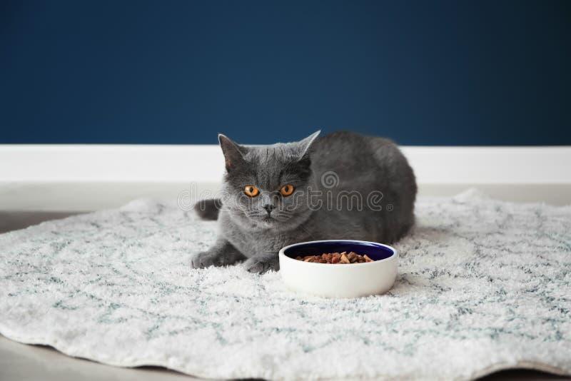 Gato lindo que miente cerca del cuenco con la comida en piso en casa foto de archivo libre de regalías