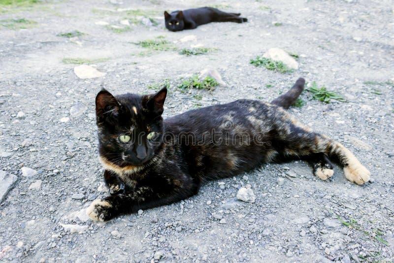 Gato lindo que miente en la tierra, y un gato negro que la mira de detrás fotos de archivo libres de regalías