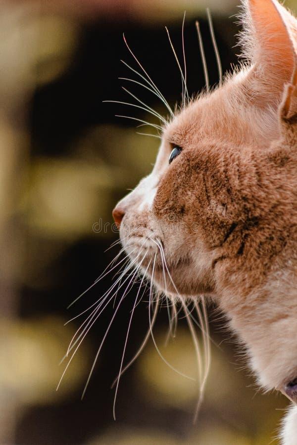 Gato lindo que mira hacia fuera en puesta del sol imagenes de archivo
