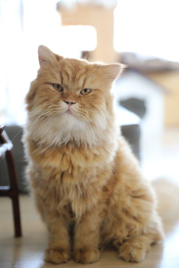Gato lindo que mira la cámara fotos de archivo libres de regalías