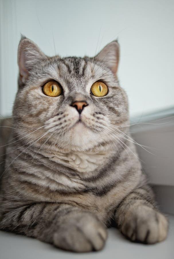 Gato lindo que mira para arriba imagenes de archivo