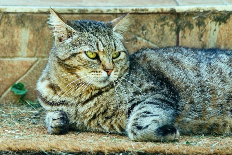 Gato lindo que se relaja en el felpudo imagen de archivo