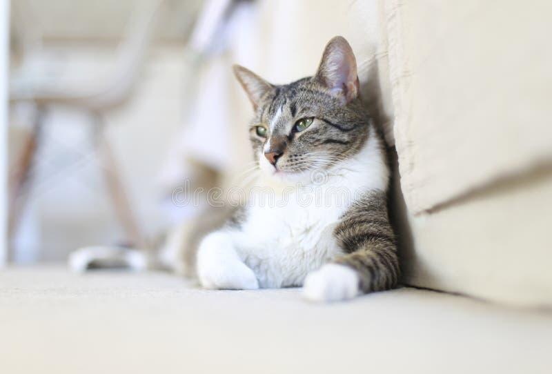 Gato lindo que se relaja en el piso casero imagenes de archivo