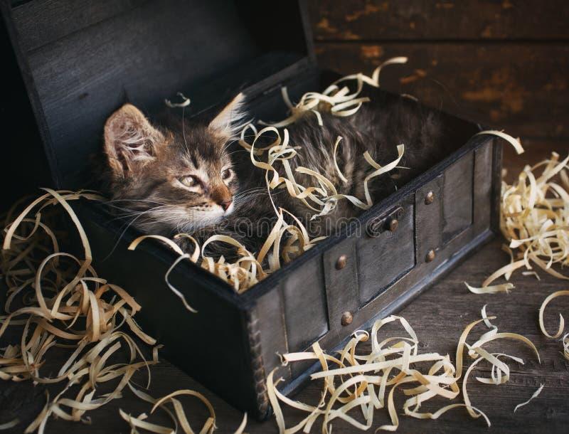 Gato listrado em uma caixa de madeira Vaquinha cinzenta imagens de stock