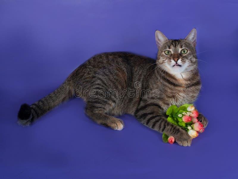 Gato listrado grosso que encontra-se com o ramalhete das flores em suas patas em b imagem de stock royalty free