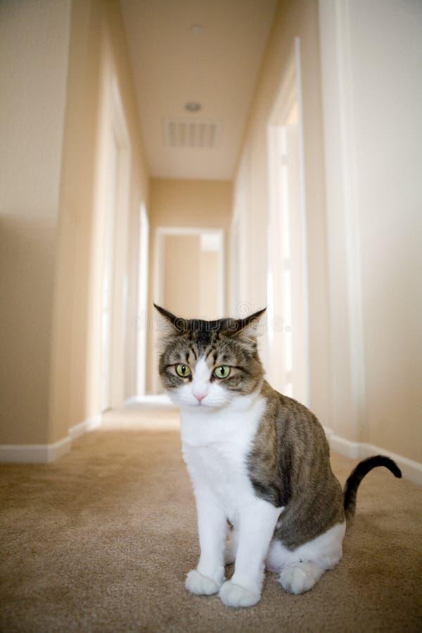 Gato macio bonito imagem de stock