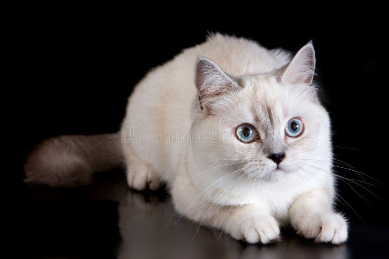 Gato macio branco fotos de stock