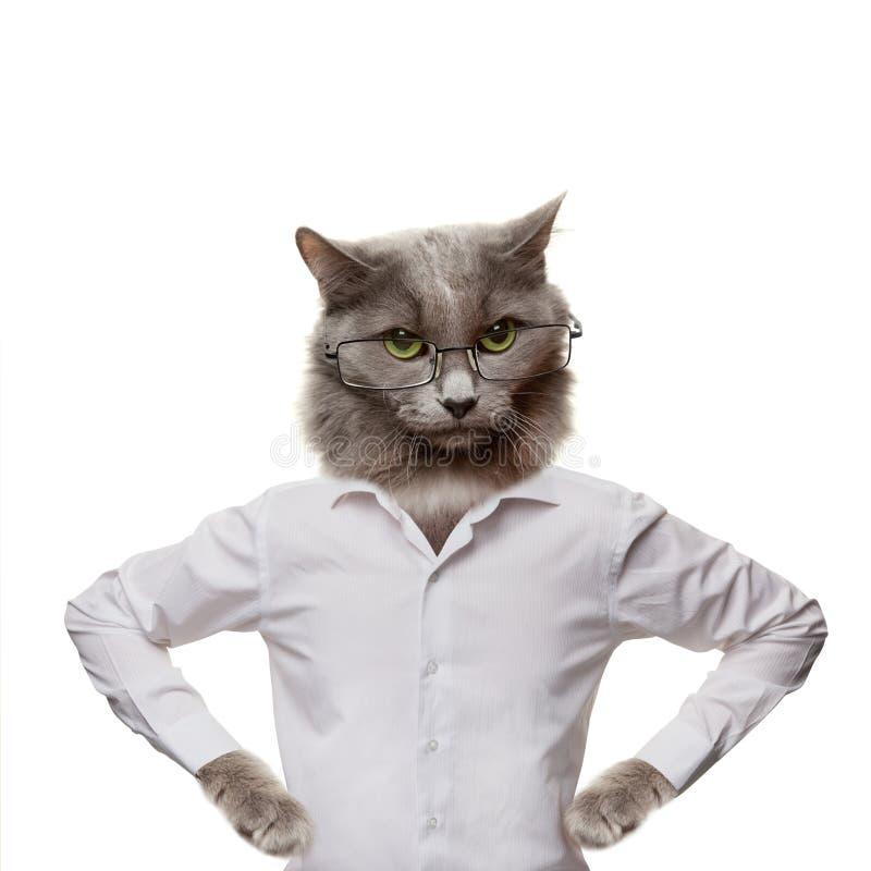 Gato macio engraçado em uns vidros. colagem em um branco imagens de stock royalty free