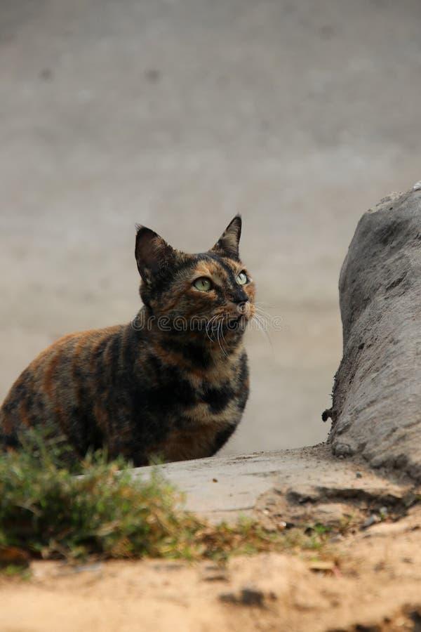 Gato macio escuro fotos de stock royalty free