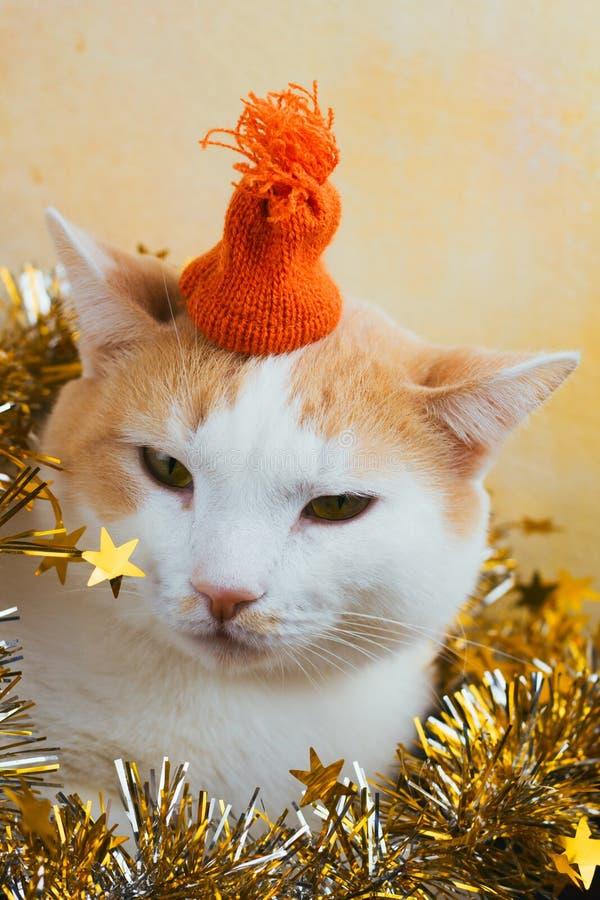 Gato macio no chapéu feito malha laranja foto de stock
