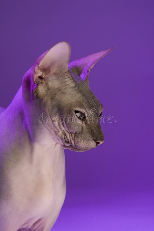 Gato magro fotografia de stock