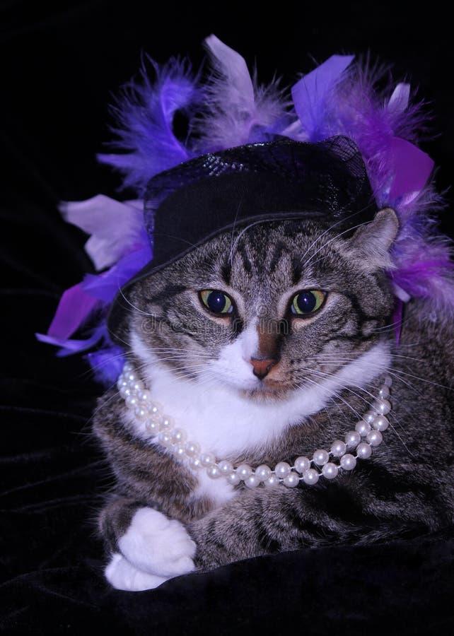 Gato majestuoso en sombrero y perlas púrpuras de la pluma fotos de archivo libres de regalías