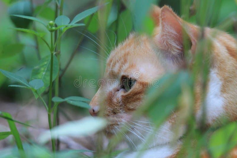 Gato malhado amarelo fotografia de stock royalty free
