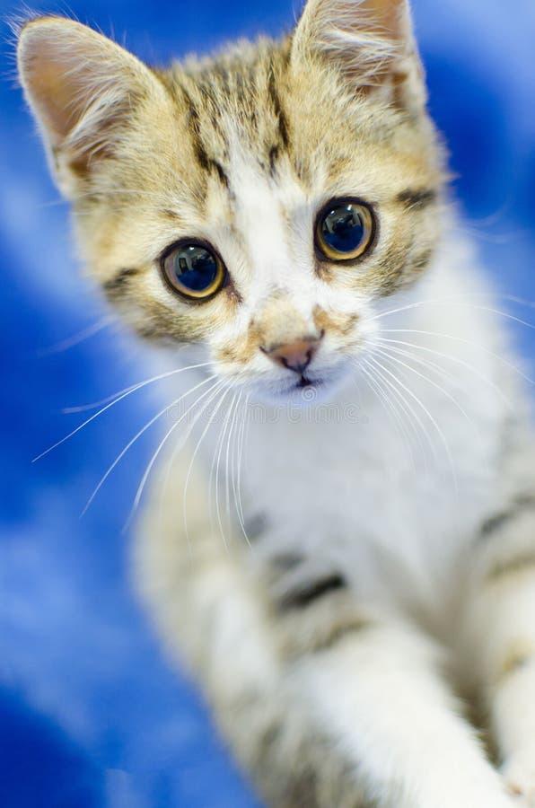 Gato malhado e gatinho branco imagens de stock royalty free