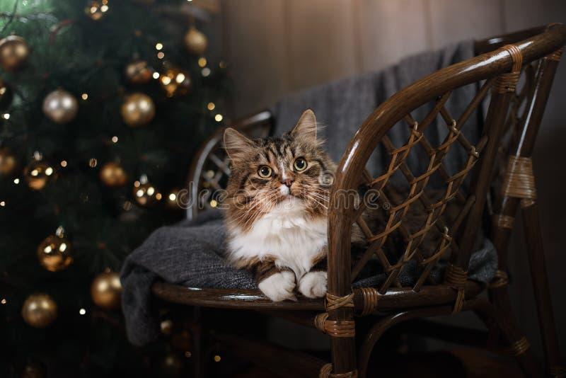 Gato malhado e gato feliz Estação 2017 do Natal, ano novo fotos de stock