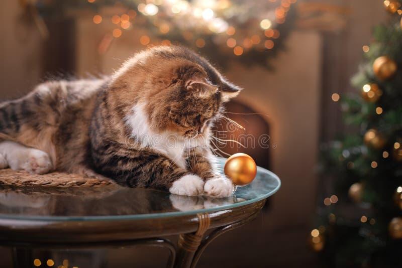 Gato malhado e gato feliz Estação 2017 do Natal, ano novo, feriados e celebração fotografia de stock royalty free