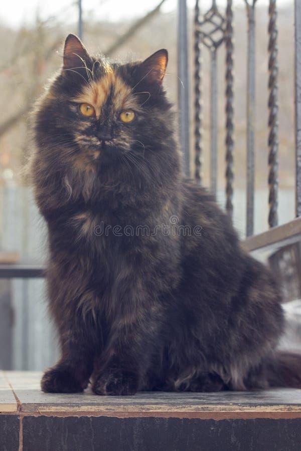 Gato manchado peludo que mira la cámara fotos de archivo