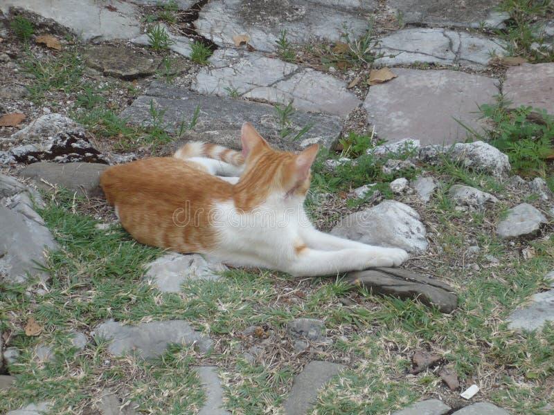 Gato manchado que encontra-se na terra fotos de stock