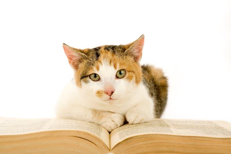 Gato manchado y libro, aislados foto de archivo